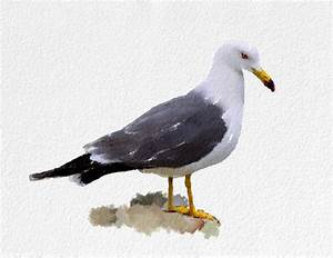 Seagull Art Print Bird black grey white brown Home Decor