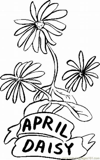 Coloring April Pages Daisy Printable Flowers Flower