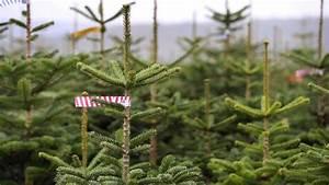 Wir Kaufen Dein Auto Mannheim : mannheim heidelberg ludwigshafen weihnachtsbaum kaufen in der region die besten tipps zum ~ Orissabook.com Haus und Dekorationen