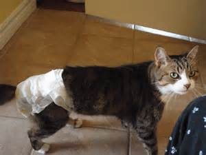 diapers for cats for cats