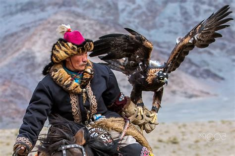 Nature Eagle Mongolian Wallpapers Hd Desktop And