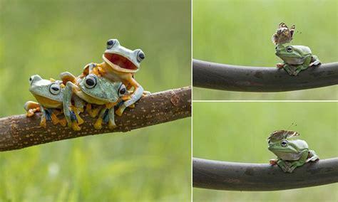 photographer hendy mp captures amphibians  fun