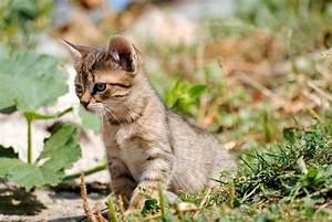 comment s'occuper d'un chaton de 1 mois