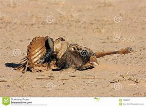 Wildebeest Carcass Royalty Free Stock Photography - Image ...