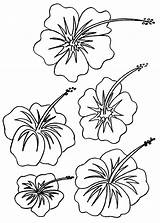 Coloring Flower Pages Hawaiian Printable Hibiscus Flowers Colouring Hawaii Adult Drawing Luau Tropical Plants Bestcoloringpagesforkids Plant Drawings Getcolorings Tattoo Colo sketch template