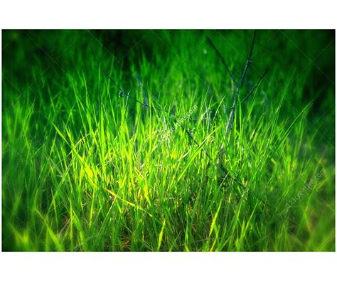 natural textures pack  high resolution nature textures grass texture leaf texture plant texture flower texture