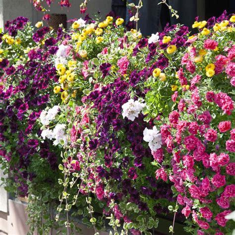 Blumen Für Balkon Winterhart balkonpflanzen pflanzen und pflegen mein sch 246 ner garten