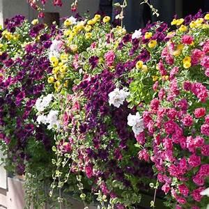 balkonblumen pflanzen pflege und tipps mein schoner garten With balkon teppich mit tapete rot blumen