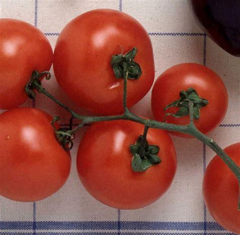 tomaten allergie