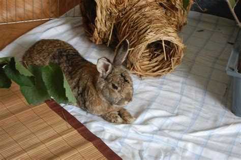 Kaninchensenioren