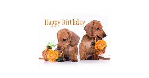 dachshund birthday postcard zazzlecom