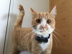 Verkleidung Für Katzen : angef tterte katzen fahndung mittels gps halsband steiger legal ~ Frokenaadalensverden.com Haus und Dekorationen