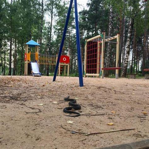 Jēkabpils Mežaparkā pie bērnu rotaļu laukuma novērots zalktis