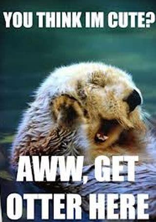 Sea Otter Meme - sea otter memes save the sea otters