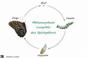 Mites Alimentaires Cycle De Reproduction : glossaire animalier le jardinoscope toute la vie ~ Dailycaller-alerts.com Idées de Décoration