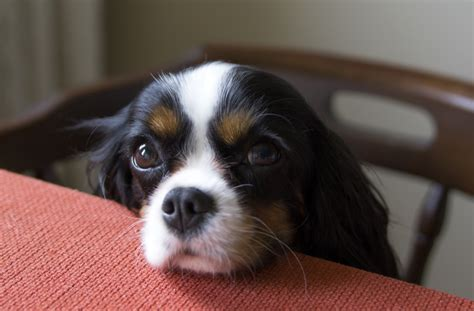 6 Ways to Help an Extra Hungry Dog   petMD