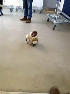 Ikea, Monkey, Runs, Around, In, Coat, Outside, Furniture, Store, In