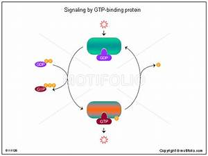 Signaling by GTP-binding protein Illustrations