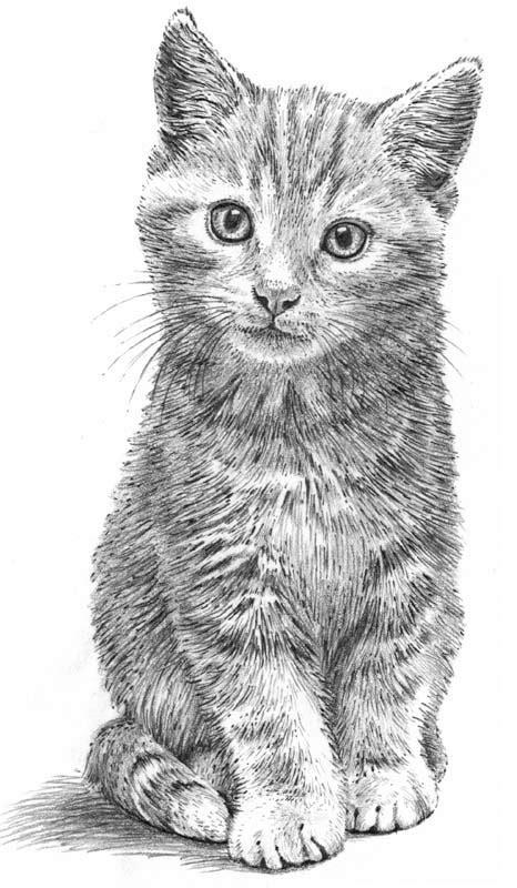 Cute Kitten Line Drawing Cat Kitty Art  Litle Pups