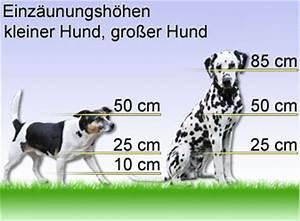 Kleiner Zaun Für Hunde : hundezaun komplett elektrischer zaun hund elektrifizierbarer gartenzaun ebay ~ Sanjose-hotels-ca.com Haus und Dekorationen
