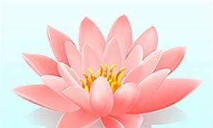 Dessin Fleurs De Lotus : coloriage fleurs de lotus sur ~ Dode.kayakingforconservation.com Idées de Décoration