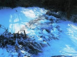 Was Machen Wespen Im Winter : was machen biber im winter ein spaziergang an der alten ~ Lizthompson.info Haus und Dekorationen