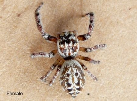Garden Spider Toxicity by Spiders On The Goldcoast