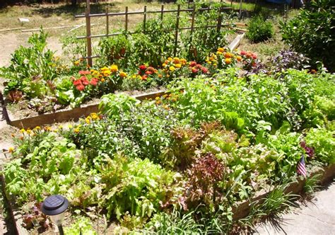 Fun Facts For Kids On Ecosystems-a Vegetable Garden An