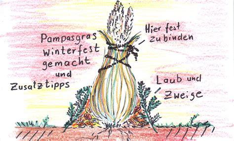 Pflanzen Winterfest Einpacken by Pasgras Das Beliebte Winterharte Ziergras Pflege