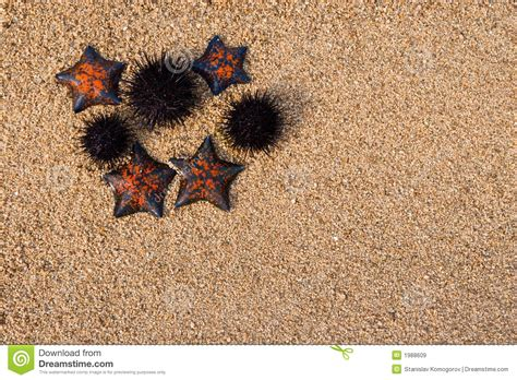 Starfish And Hedgehogs Royalty Free Stock Images - Image ...