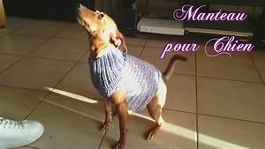 Video Pour Chien : tuto tricot manteau pour chien youtube ~ Medecine-chirurgie-esthetiques.com Avis de Voitures