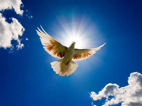 pictures   sun   sky dove bird