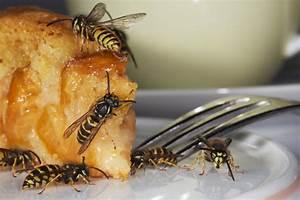 Bienen Und Wespen : fiese insektenstiche schnelle hilfe gegen wespen und bienenstiche bei kindern ~ Whattoseeinmadrid.com Haus und Dekorationen