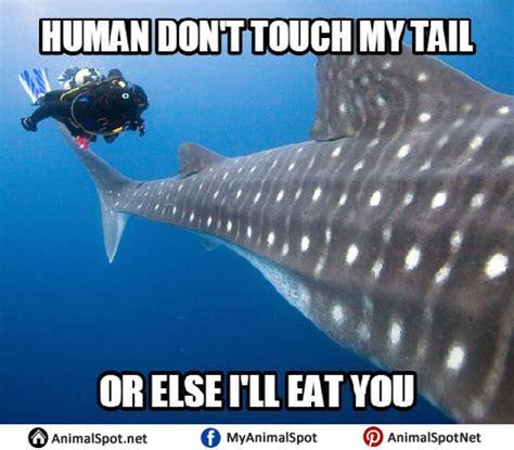 whale memes