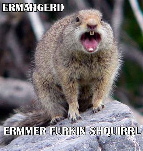 Ermahgerd Animal Memes - 43 best images about ermahgerd animals on pinterest baby goats roaches and ashley walters