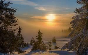 Landscape, Nature, Sunset, Winter, Mist, Forest, Snow