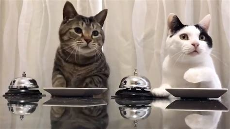 We Can't Stop Watching These Cats Ringing a Bell and