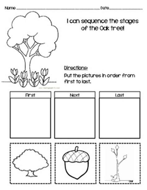 Sequencing Worksheet for Oak Tree! by Messy Teaching | TpT