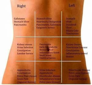 Abdominal Organ Placement