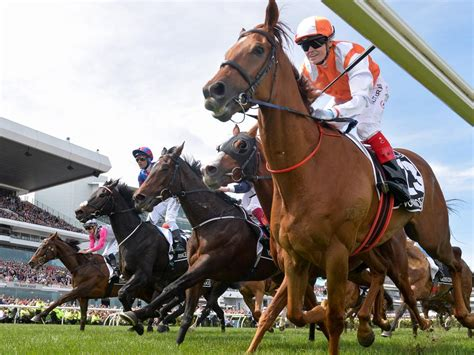 cup melbourne declare vow form field final horses millions magic being odds sales coast horse racing sister half king guide