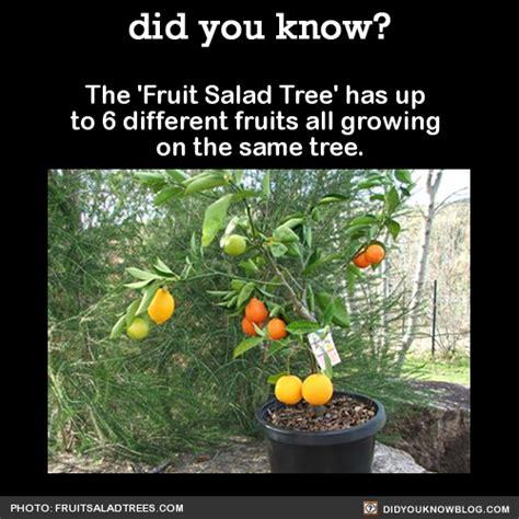 fruit salad tree california plant grafting tumblr
