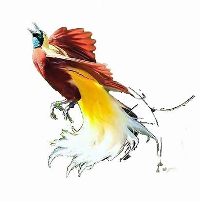Burung Lukisan Gambar Cendrawasih Merak Simple Cara