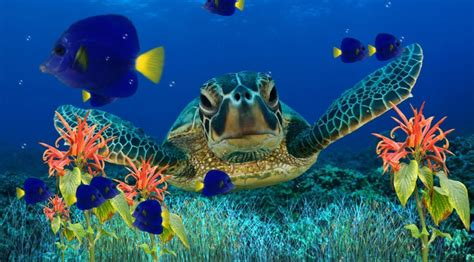 Animated Coral Reef Wallpaper - coral reef wallpapers wallpaper cave