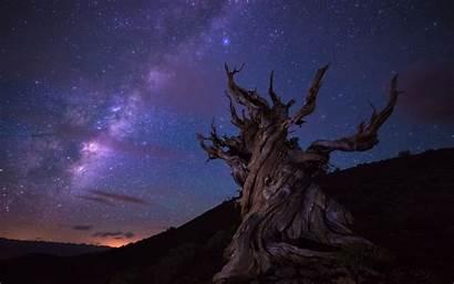 Stars Trees Landscape Wallpapers Mountain Desktop Backgrounds
