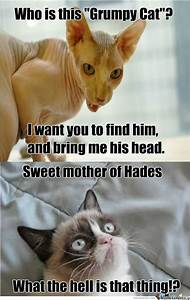 Find the Stunning Funny Clean Grumpy Cat Memes - Hilarious ...