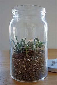 Terrarium Für Pflanzen : diy mini terrarium kakteen im glas unhyped ~ Frokenaadalensverden.com Haus und Dekorationen