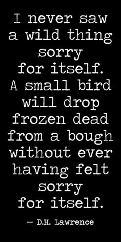 lawrence quotes image quotes  hippoquotescom