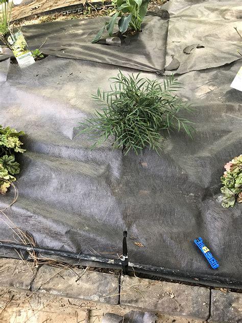 create  shade garden oasis   backyard
