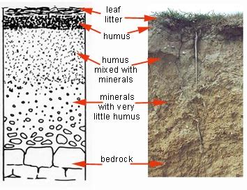 explain  diagram  soil profile social science