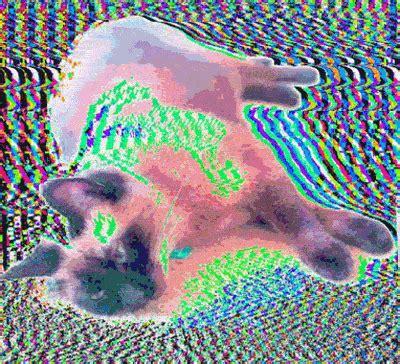 psychedelic cat gifs wifflegif